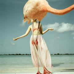 Flamingo 2 (2015)