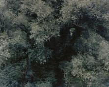 Ricarda Roggan, Baumstück 9, 200