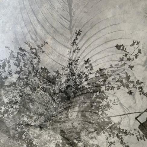Augusta Wood, Tree, 2016