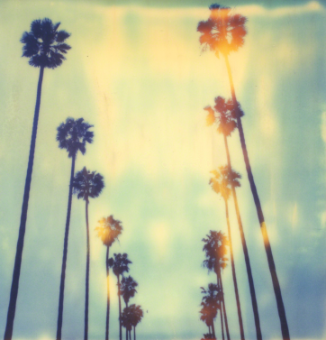 Palm Trees at Wilcox (Stranger than Paradise), 1999