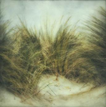 Beach Grass III