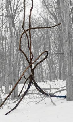 Vine in Snow (2015)