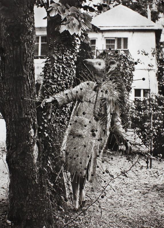 Thinskinned, Hienohipiäinen, 2015